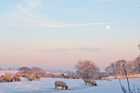 Snowy Alvechurch