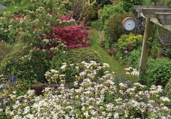 Di's garden