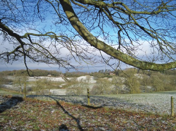 February in Foxhill