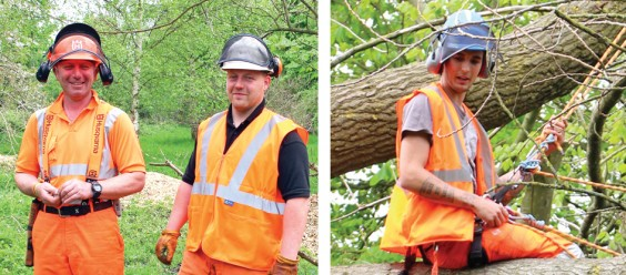 Wildside tree surgeons