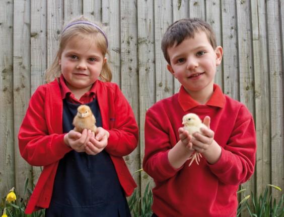 Hannah, Ethan and the chicks
