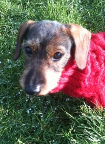 Otto the puppy