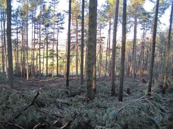 Newbourne Wood