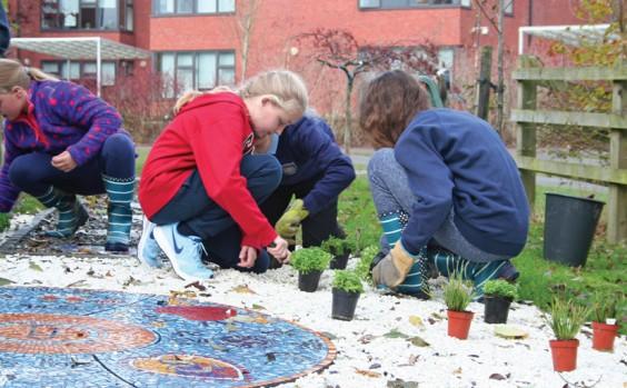 Planting Alpines