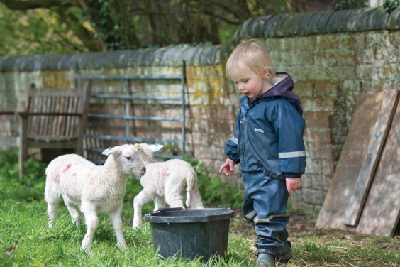 Learning about lambs