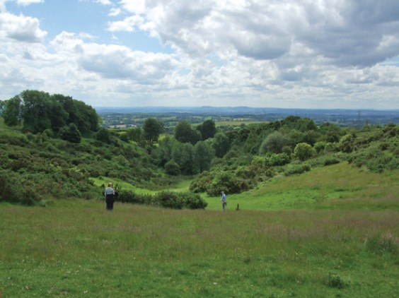 Waseley Hills in summer