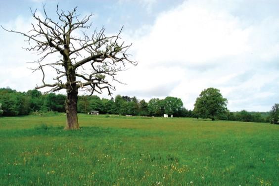 Barnt Green fields