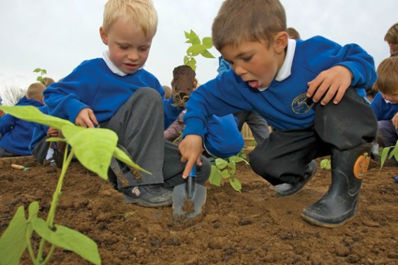 School pupils planting beans