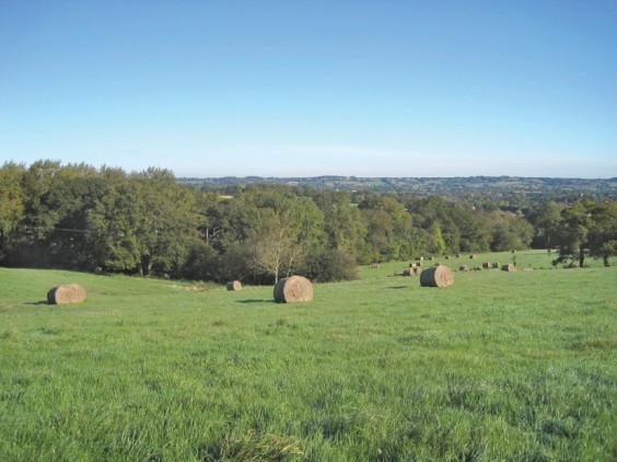 Grass field after harvest