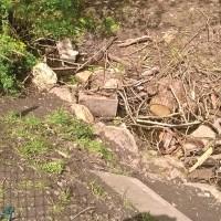 Stream debris