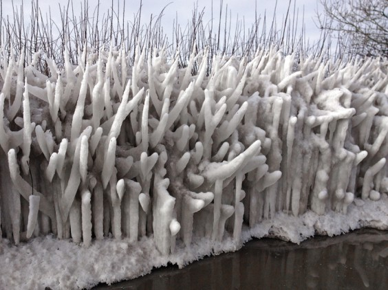 Icy hedge