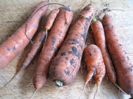Proper carrots!