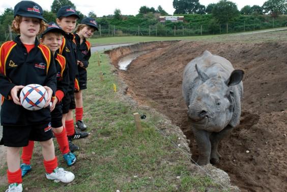 Rhinos meet a rhino!