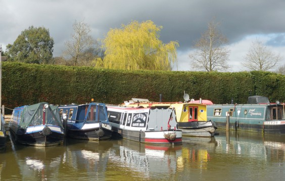 Willows by canal